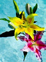 Floating Lilies 2 Fine Art Print
