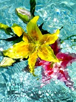 Floating Lilies 3 Fine Art Print