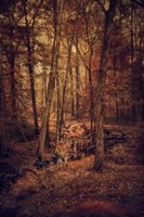 Shiloh Creek 3 Fine Art Print