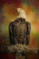 The Bald Eagle In Autumn Fine Art Print