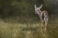 Tiny Fawn In The Meadow Fine Art Print