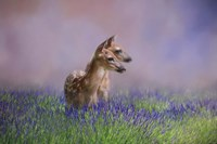 Twin Fawns In The Lavender Fine Art Print