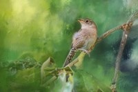 Wren In The Garden Fine Art Print