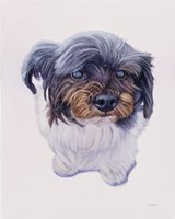 McCoy Fine Art Print