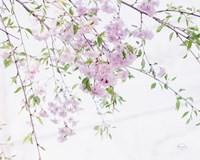 Spring Branches II Fine Art Print