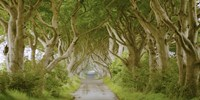 The Dark Hedges, Ireland Fine Art Print
