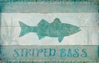 Striped Bass Fine Art Print