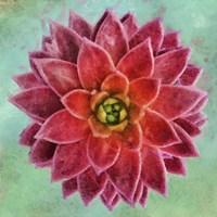 Succulent II Fine Art Print