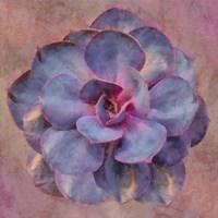 Succulent III Fine Art Print