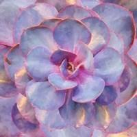 Succulent 2922 Fine Art Print