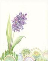 Hello Hyacinth Fine Art Print