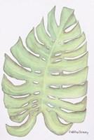 Fern Frond Fine Art Print
