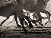 Off to the Races Fine Art Print