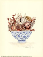 Seashell Collection I Framed Print