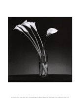 Arums 1990 Fine Art Print