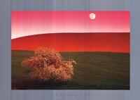 Palouse Hills, Usa Fine Art Print