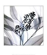 Eucalyptus Art