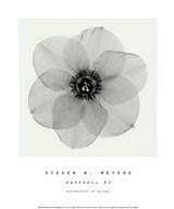 Daffodil #2  Fine Art Print