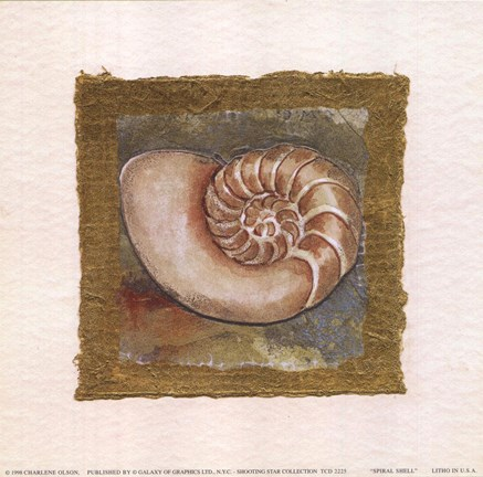 Framed Spiral Shell Print