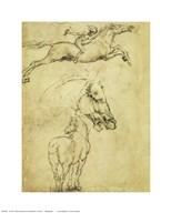 Sketch of a Horse  Fine Art Print