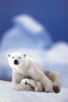 Framed Polar Bear And Baby Print