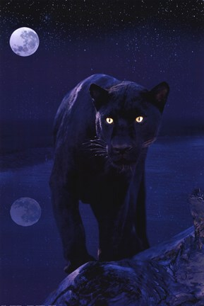 Black Panther In Moonlight Wall Poster By Unknown At