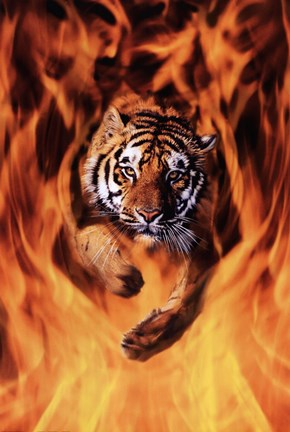 Framed Bengal Tiger Jumping Flames Print