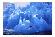 Penguins on Blue Ice