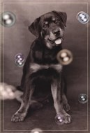 Dog with Bubbles  Wall Poster