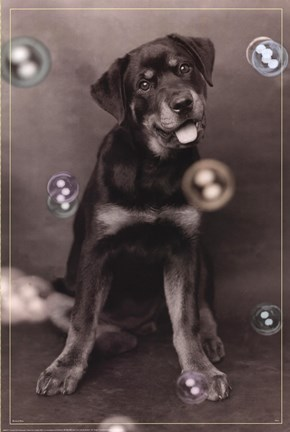 Framed Dog with Bubbles Print
