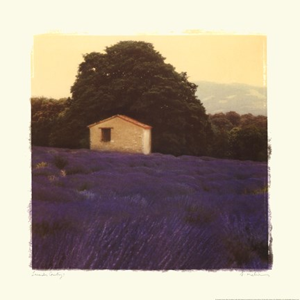 Framed Lavender Country Print