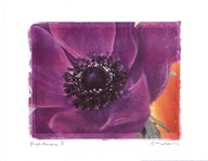 Purple Anemones II