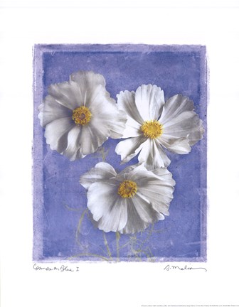 Framed Cosmos on Blue I Print