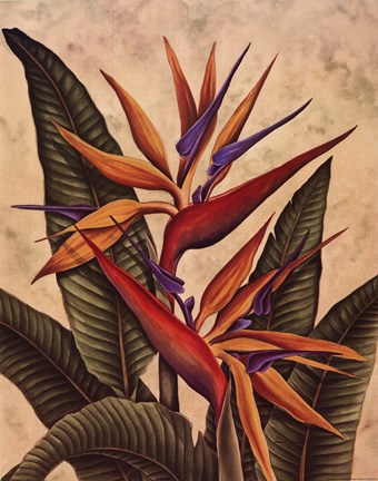 Framed Tropical Bird of Paradise Print