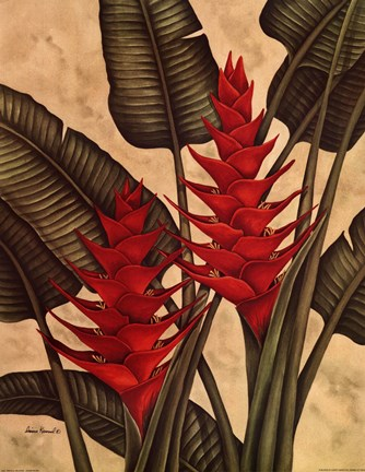 Framed Tropical Heliconia Print