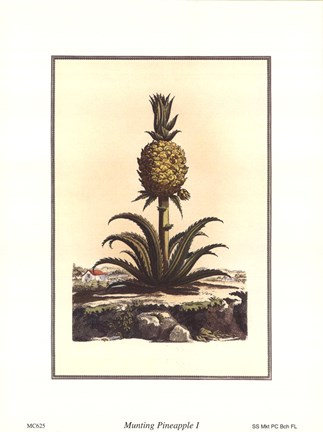 Framed Pineapple I Print