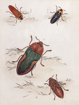 Framed Chelsea Beetles-1 of 3 Print