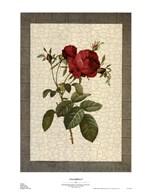 Grandiflora I Art