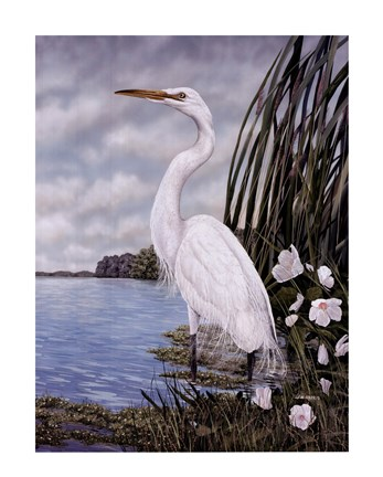 Framed Great White Egret Print
