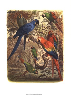 Framed Tropical Birds III Print