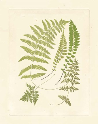 Framed Ferns with Platemark II Print