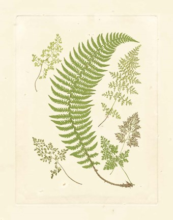 Framed Ferns with Platemark IV Print