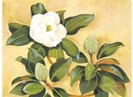 Southern Magnolia II  Fine Art Print