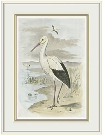 Framed White Stork Print