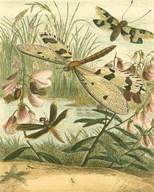 Dragonfly Gathering I  Fine Art Print
