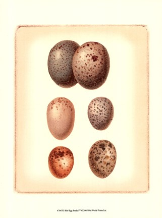 Framed Bird Egg Study IV Print