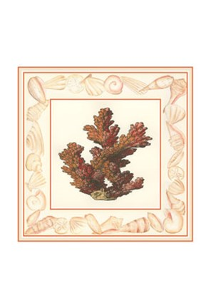 Framed Coral with Shell Border II Print