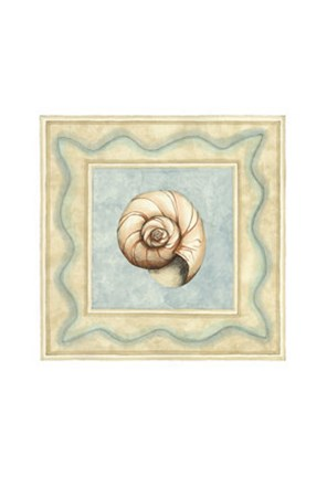 Framed Shell Collector II Print