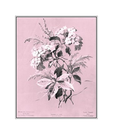 Framed Hydrangea on Pink Print
