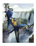 Iguazu  Fine Art Print